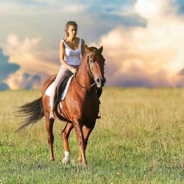 banner trekking cavallo